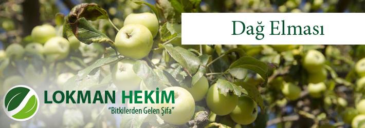 Dağ Elması, Anadolu Adaçayı, Elmaotu